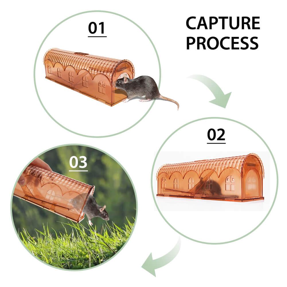 best humane mouse trap