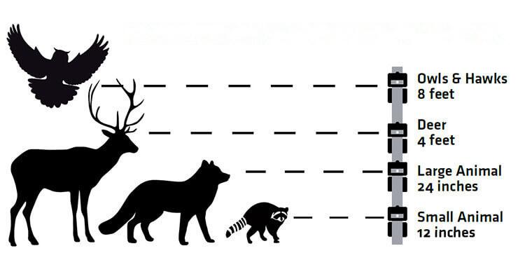 Animal deterrent
