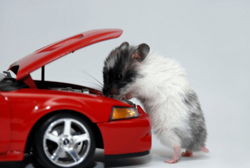 how to keep mice out of vehicles