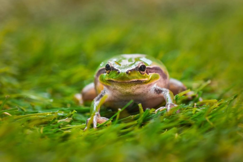 How to get rid of frogs?