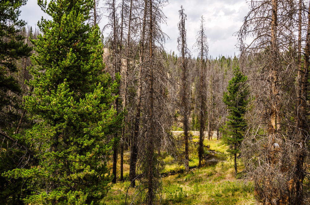 how to get rid of bark beetles