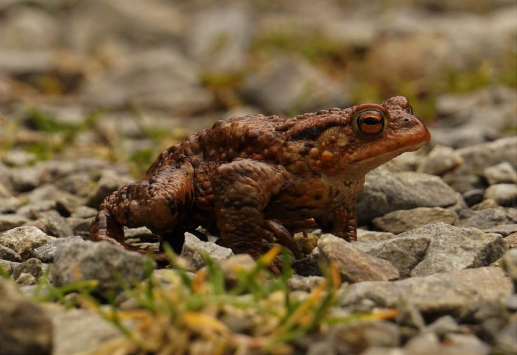 howto get rid of frogs in garden