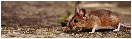 can-mice-climb-and-other-mice-facts