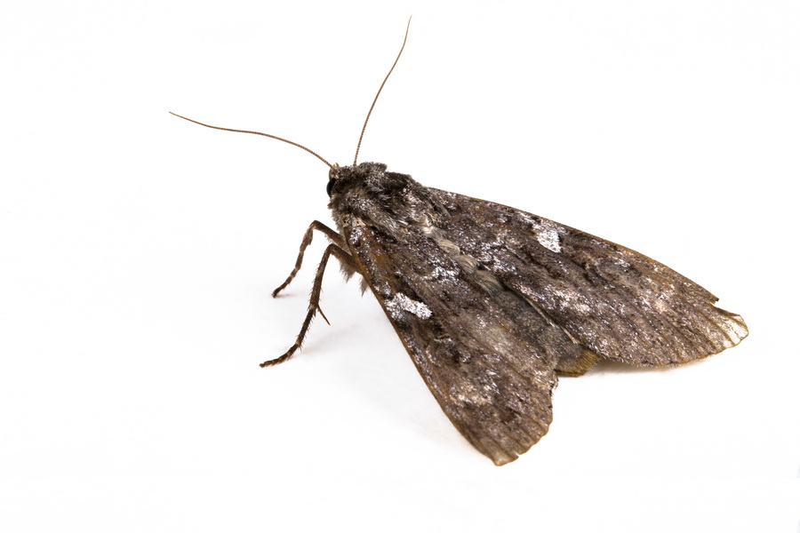 how to get rid of moth