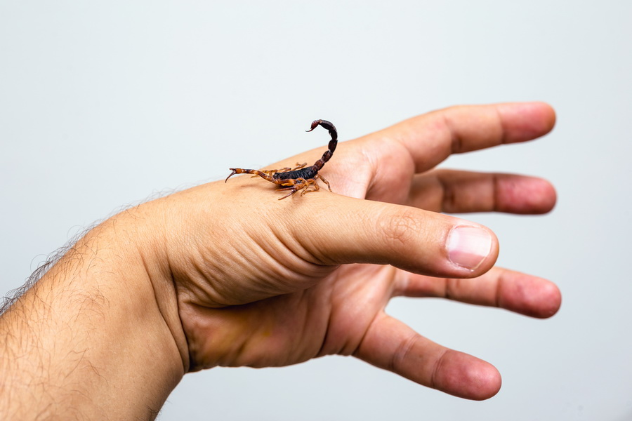 how to get rid of scorpions