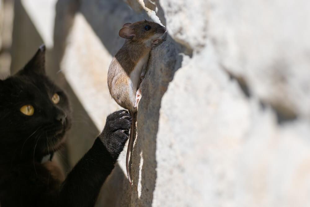 mice climb walls